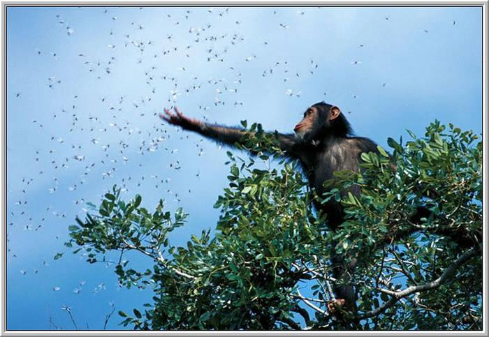 monkey reaching