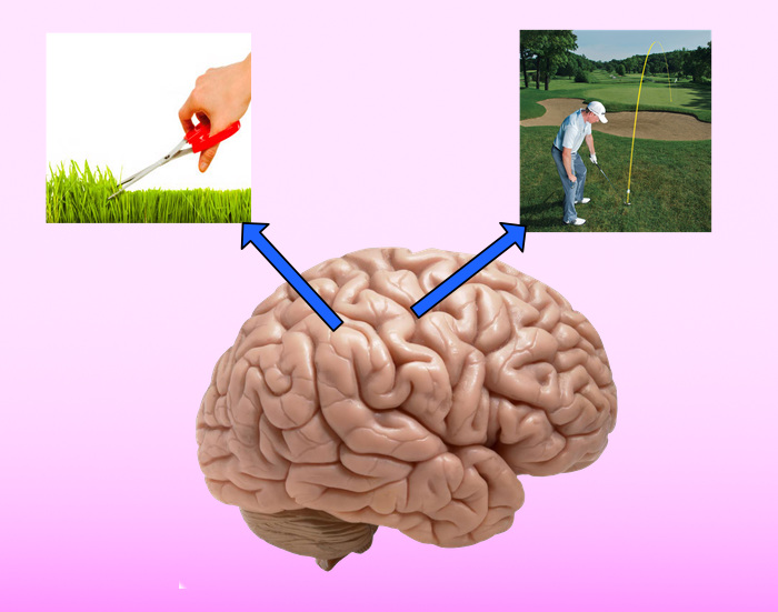 attention brain