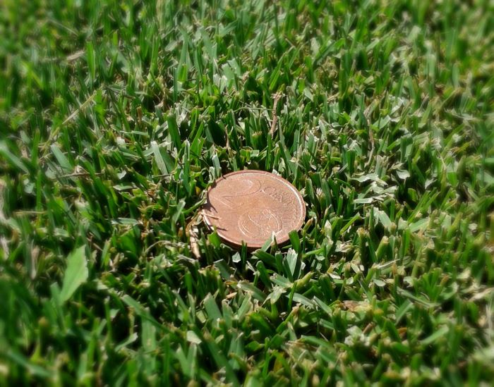 coin in grass 2