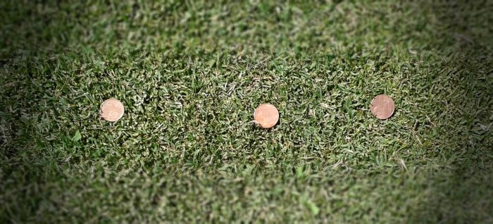 coins in grass