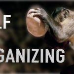 self organizing