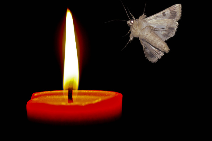 moth-to-flame